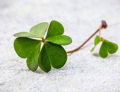 What Could Be Better than Green Beer or a 4-Leaf Clover?