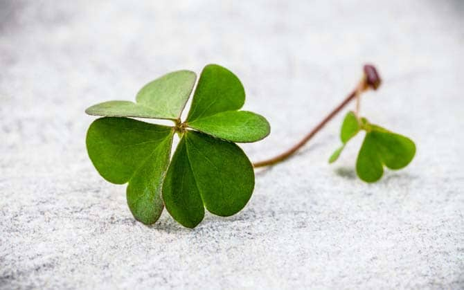 single 4 leaf clover