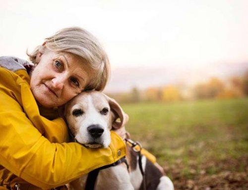 Seniors, Aging, and Companion Pets